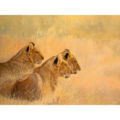 """DEInternationalGraphics """"Panthera leo"""" von Danielle Beck, Grafikdruck"""