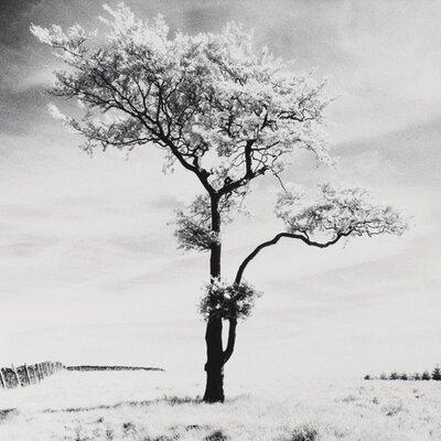 """DEInternationalGraphics """"Lone Tree # 3, Peak District, England"""" von Dave Butcher, Fotodruck"""