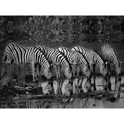"""DEInternationalGraphics """"Zebras Reflection"""" von Xavier Ortega, Fotodruck"""