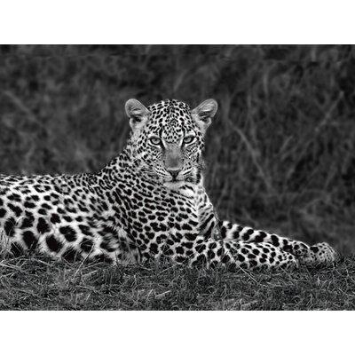 """DEInternationalGraphics """"Leopard Portrait"""" von Xavier Ortega, Fotodruck"""