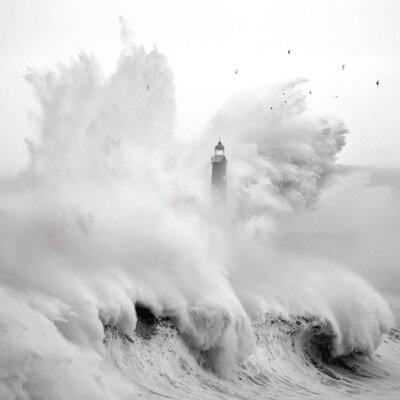 """DEInternationalGraphics """"Birds in the Storm"""" von Marina Cano, Fotodruck"""