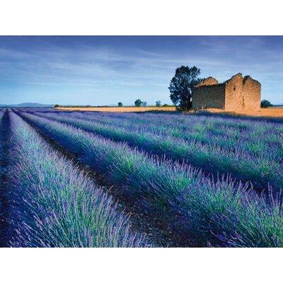 """DEInternationalGraphics """"Stone Barn in Lavender Field""""von Simon Kayne, Fotodruck"""