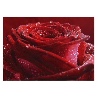 PPS. Imaging GmbH Tapete Proud Red Rose 280 cm H x 400 cm B