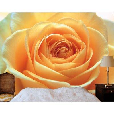 PPS. Imaging GmbH Tapete The Orange Rose 280 cm H x 400 cm B