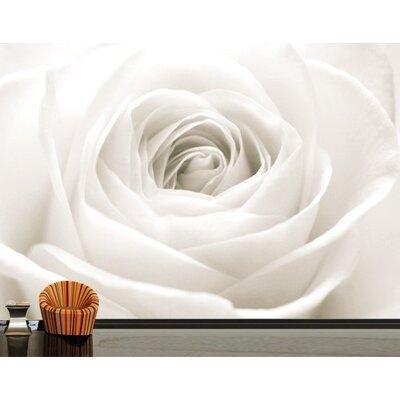 PPS. Imaging GmbH Tapete The White Rose 280 cm H x 400 cm B