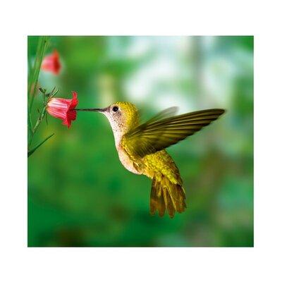 PPS. Imaging GmbH Tapete Yellow Hummingbird 280 cm B cm H x 300 cm B