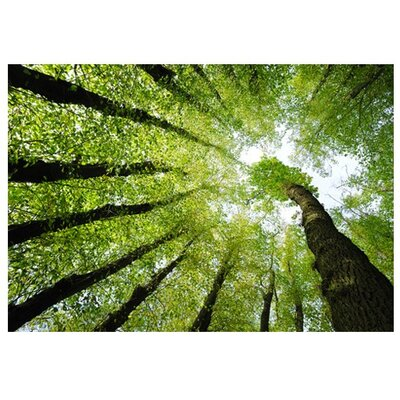 PPS. Imaging GmbH Tapete Forest Dreams 280 cm B cm H x 400 cm B