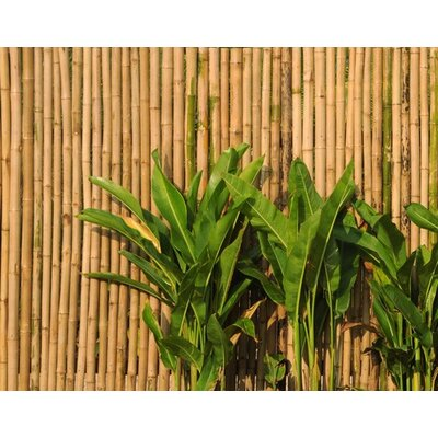 PPS. Imaging GmbH Tapete Wall of Bamboo 280 cm H x 400 cm B
