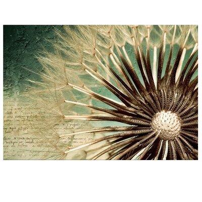 PPS. Imaging GmbH Tapete Dandelion Poetry 280 cm B cm H x 400 cm B