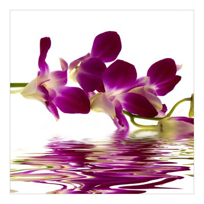 PPS. Imaging GmbH Tapete Pink Orchid Waters 240 cm H x 240 cm B