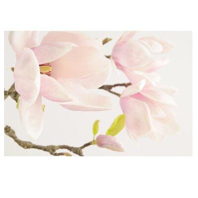 PPS. Imaging GmbH Tapete Royal Magnolia 290 cm H x 432cm B