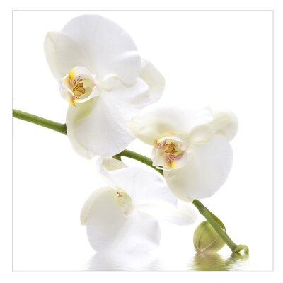 PPS. Imaging GmbH Tapete White Orchid Waters 192 cm H x 192 cm B