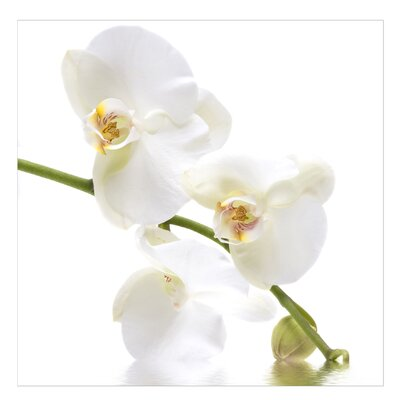 PPS. Imaging GmbH Tapete White Orchid Waters 240 cm H x 240 cm B
