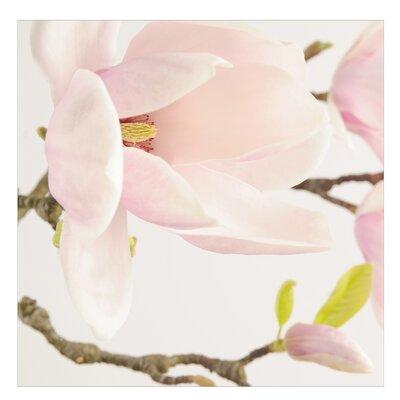 PPS. Imaging GmbH Tapete Royal Magnolia 288 cm H x 288 cm B
