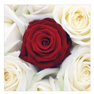 PPS. Imaging GmbH Tapete Bed of Roses 240 cm H x 240 cm B