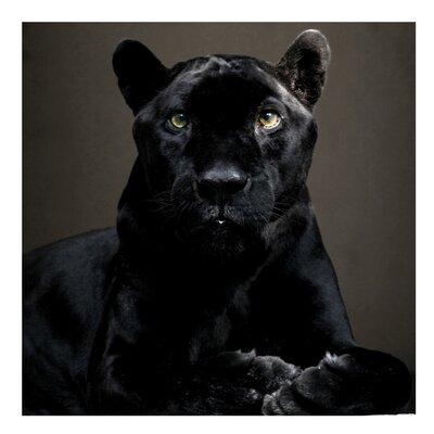 PPS. Imaging GmbH Tapete Black Puma 336 cm H x 336 cm B