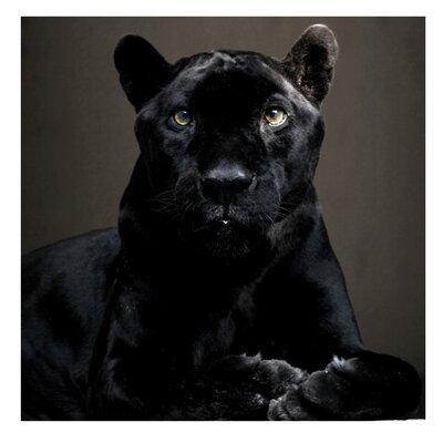 PPS. Imaging GmbH Tapete Black Puma 192 cm H x 192 cm B