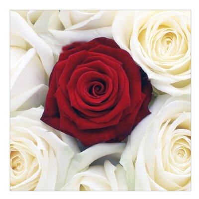 PPS. Imaging GmbH Tapete Bed of Roses 288 cm H x 288 cm B