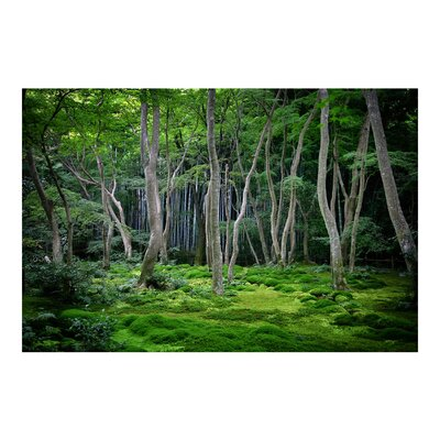 PPS. Imaging GmbH Tapete Japanischer Wald 190 cm H x 288 cm B