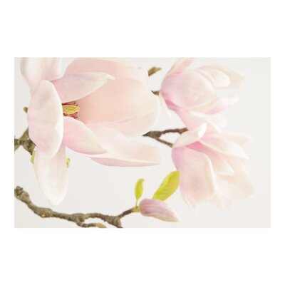 PPS. Imaging GmbH Tapete Royal Magnolia 255 cm H x 384 cm B