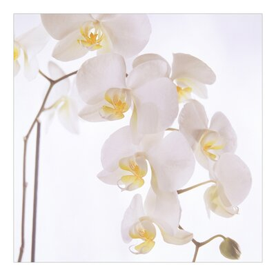 PPS. Imaging GmbH Tapete Gracious Orchids 288 cm H x 288 cm B