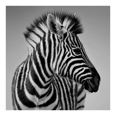 PPS. Imaging GmbH Tapete Zebra Baby Portrait II 192 cm H x 192 cm B