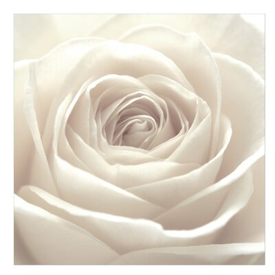 PPS. Imaging GmbH Tapete Pretty White Rose 192 cm H x 192 cm B