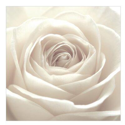 PPS. Imaging GmbH Tapete Pretty White Rose 240 cm H x 240 cm B