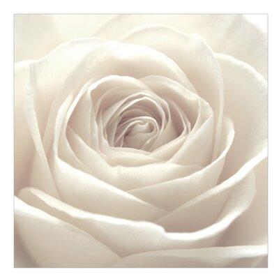 PPS. Imaging GmbH Tapete Pretty White Rose 336 cm H x 336 cm B