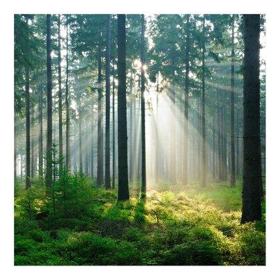 PPS. Imaging GmbH Tapete Enlightened Forest 336 cm H x 336 cm B