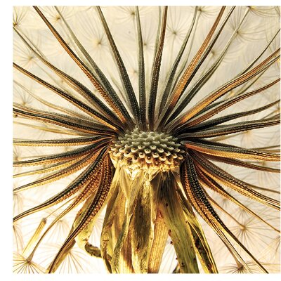 PPS. Imaging GmbH Tapete Dandelion Close Up 240 cm H x 240 cm B