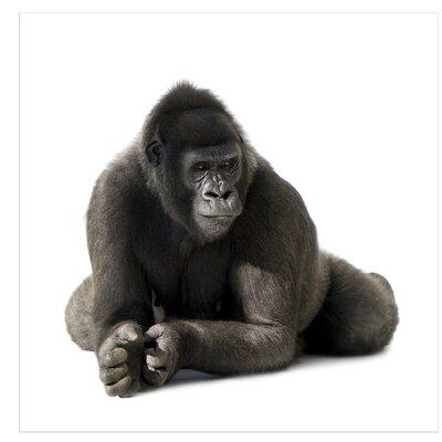 PPS. Imaging GmbH Tapete Gorilla I 240 cm H x 240 cm B
