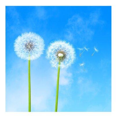 PPS. Imaging GmbH Tapete Flying Seeds 288 cm H x 288 cm B