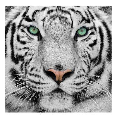 PPS. Imaging GmbH Tapete Weißer Tiger 192 cm H x 192 cm B