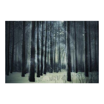 PPS. Imaging GmbH Tapete Mystischer Winterwald 255 cm H x 384 cm B