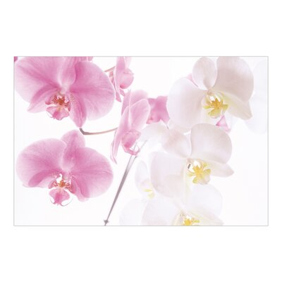 PPS. Imaging GmbH Tapete Delicate Orchids 320 cm H x 480 cm B