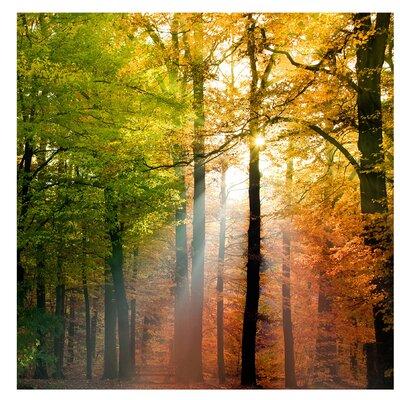 PPS. Imaging GmbH Tapete Morning Light 192 cm H x 192 cm B