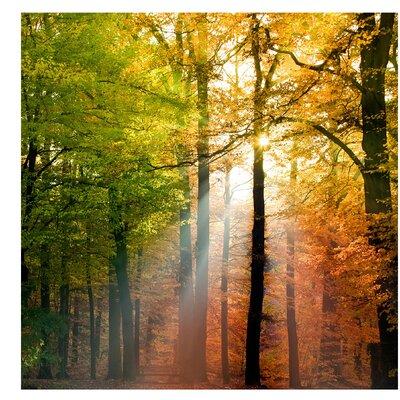 PPS. Imaging GmbH Tapete Morning Light 336 cm H x 336 cm B