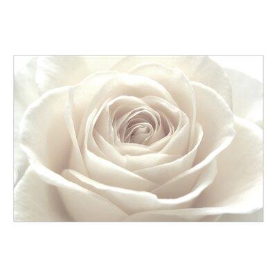 PPS. Imaging GmbH Tapete Pretty White Rose 290 cm H x 432 cm B