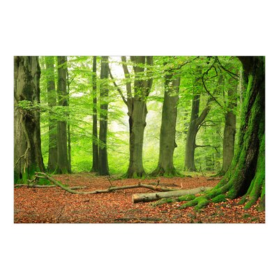 PPS. Imaging GmbH Tapete Mighty Beech Trees 225 cm H x 336 cm B