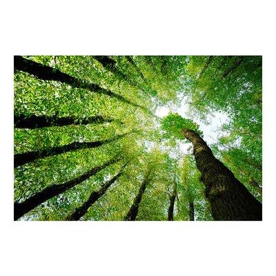 PPS. Imaging GmbH Tapete Bäume des Lebens 225 cm H x 336 cm B