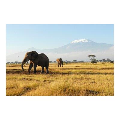 PPS. Imaging GmbH Tapete Elefanten vor dem Kilimanjaro in Kenya 225 cm H x 336 cm B