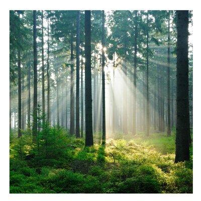 PPS. Imaging GmbH Tapete Enlightened Forest 288 cm H x 288 cm B