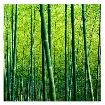 PPS. Imaging GmbH Tapete Bambuswald 288 cm H x 288 cm B