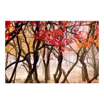 PPS. Imaging GmbH Tapete Japan im Herbst 290 cm H x 432 cm B