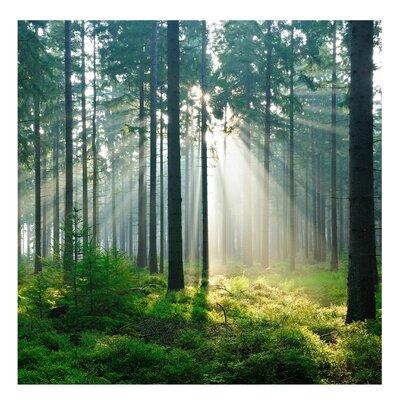 PPS. Imaging GmbH Tapete Enlightened Forest 240 cm H x 240 cm B