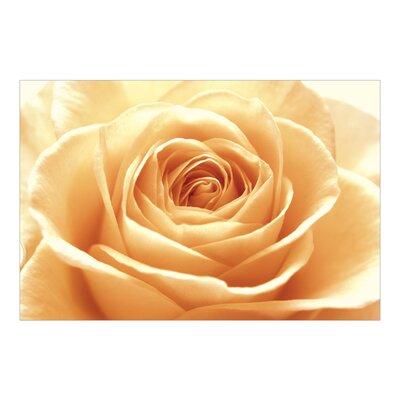PPS. Imaging GmbH Tapete Sweet Orange Rose 320 cm H x 480 cm B