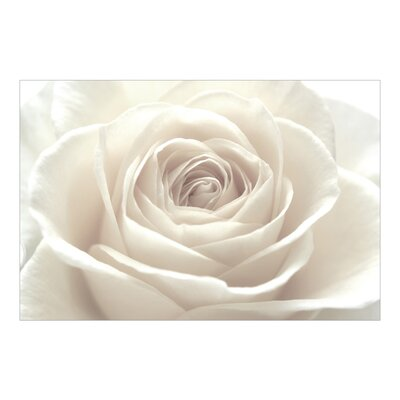 PPS. Imaging GmbH Tapete Pretty White Rose 255 cm H x 384 cm B