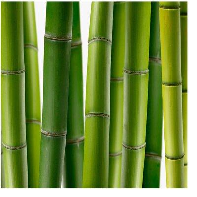 PPS. Imaging GmbH Tapete Bambuspflanzen 192 cm H x 192 cm B