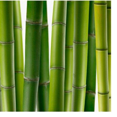 PPS. Imaging GmbH Tapete Bambuspflanzen 240 cm H x 240 cm B